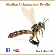 Abelhas-urbanas-sem-ferrão-180x180