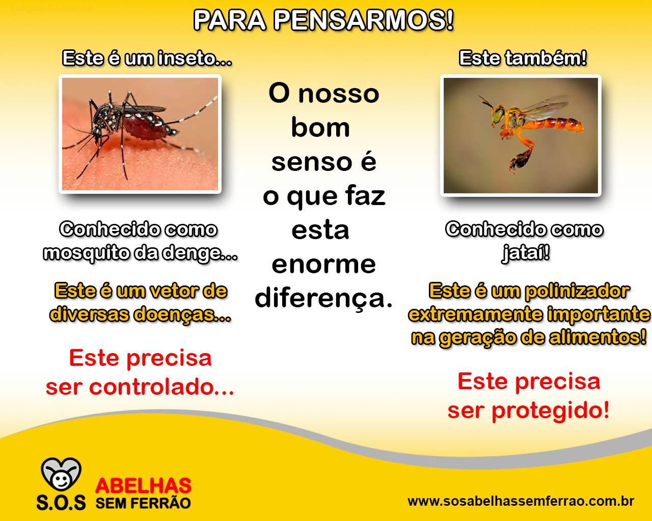 Imagem Aedes