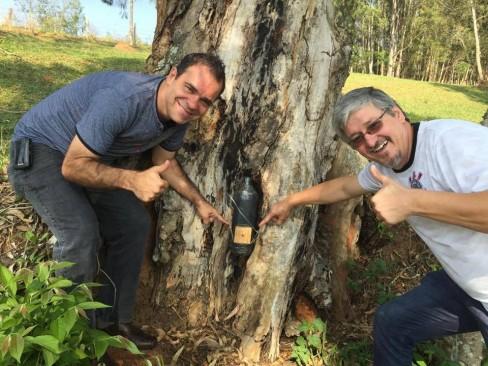 Como Capturar Abelhas Sem Ferrão?