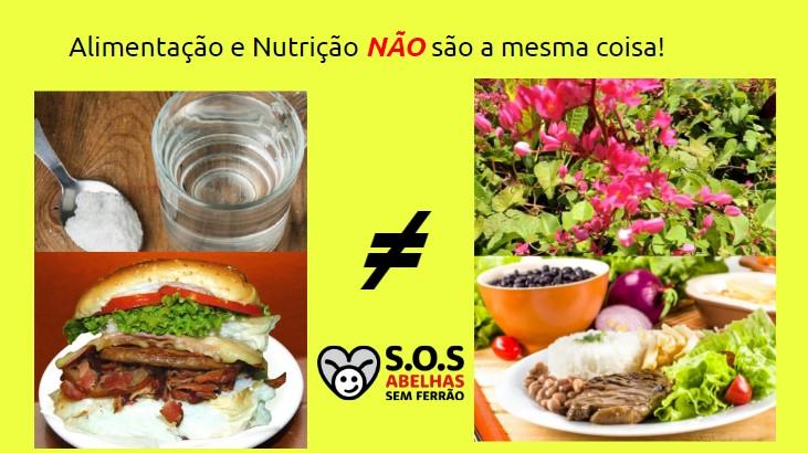 Introdução A Alimentação E Nutrição De Abelhas Sem Ferrão.