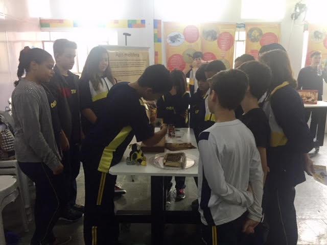 Abelhas Sem Ferrão Na Escola, Um Ano De Doces Resultados.