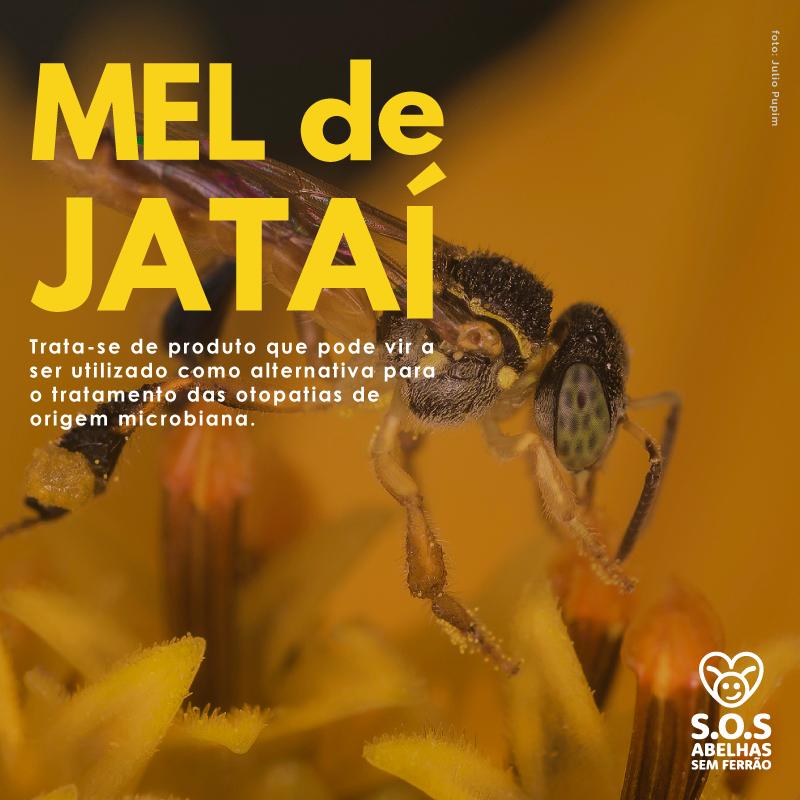 ATIVIDADE ANTIMICROBIANA DO MEL DE ABELHAS JATAÍEM CULTIVO DE MICRORGANISMOS