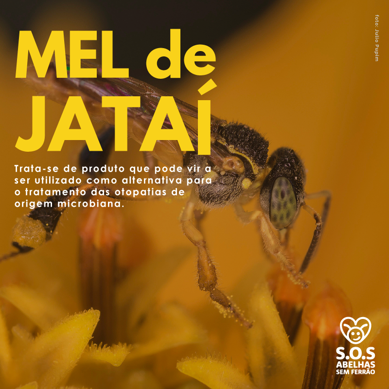 Benefícios Antimicrobiana Do Mel Da Jataí.