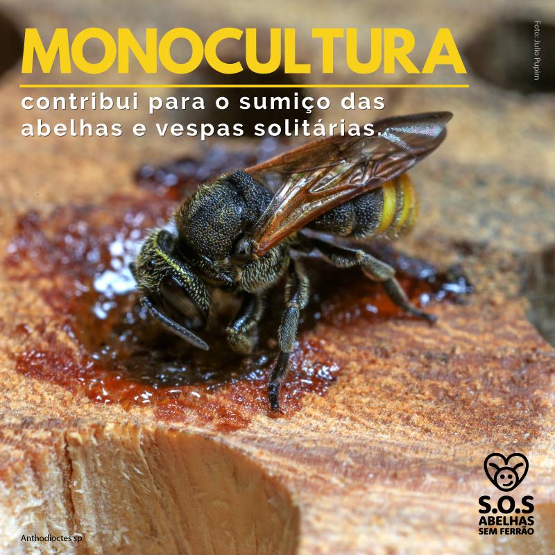 Monocultura Contribui Para Sumiço De Abelhas